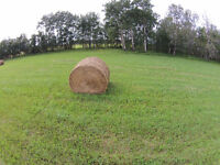 2015 Hay for sale. Meadow brome, Timothy
