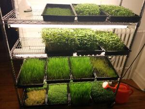 Indoor Sprout Farm - Germination - Garden - Grow
