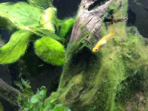 Endlers to rehome