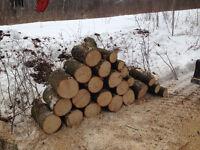 Bois de sculture tieul bois brut