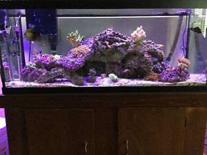 75 gallons' reef (saltwater) aquarium - fully equipped