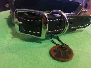 "2"" Premium  Spiked/Studded  ""Gladiator""  Leather Dog Collar  Sarnia Sarnia Area image 2"