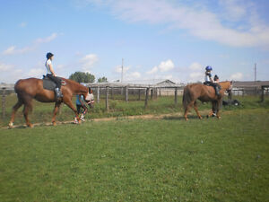 Horse riding for kids 4+yrs - Every weekend!! London Ontario image 1