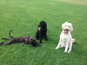 Pet Sitting Services- In/Out of home ( Fredericton )