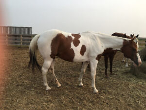 SUPER PAINT MARE SUITABLE FOR YOUTH.
