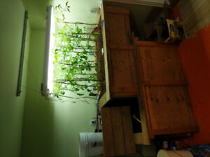 Aquaponic system for sale
