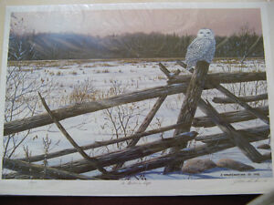 Owl Numbered Print