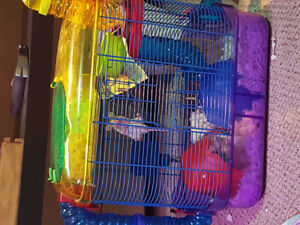 Free mice with cage