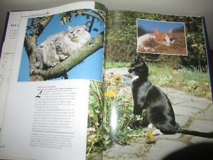 Gros livres Kittens, les chats, Phoques et Otaries Gatineau Ottawa / Gatineau Area image 6