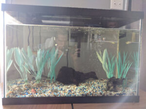 Looking for a home for my freshwater fishes