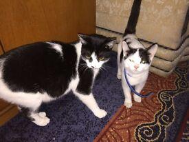 Kitten,kitten's mum and dad.