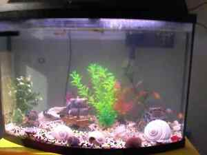 50 gallon complete fish tank everythig included 200$ worth of ju