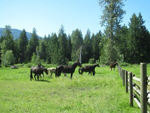 Pasture for Horse Boarding