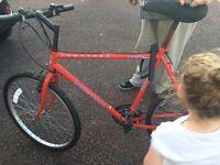Bikes + 3
