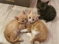 Kittens ready for their new homes