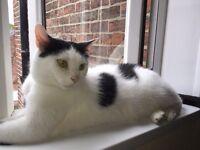 Gorgeous male cat