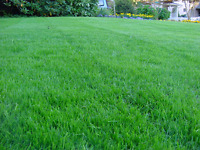 Lawn Airation