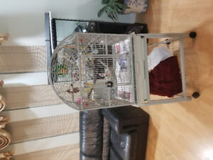 Birdcage, one lovebird, one buggies. For $200