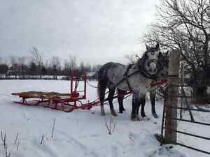 Sleigh rides and group parties Kingston Kingston Area image 2