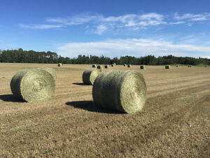 Round Timothy Hay Bales