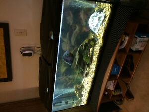 55gal fish tank with all  accessories
