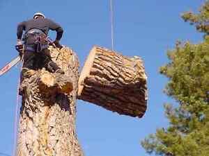 705 TREE SOLUTIONS FREE ESTIMATES CALL OR TEXT  705-796-0433 Kawartha Lakes Peterborough Area image 5