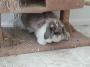 Rehoming my Bunny