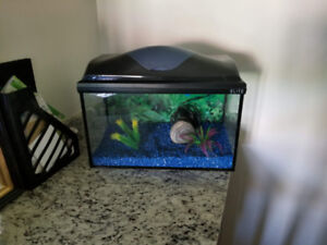 40L Fish Tank with all supplies (filter, rocks, cleaning vacuum)