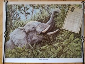 """""""Little Great One""""signed Gail Adams Print"""