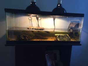 Turtle , tank and stand