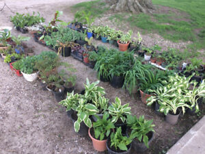 Plants for sale in Brownsville