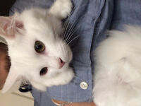 ------Super Cute Kitten looking for a new sweet home------