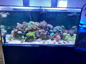 Aqua evolution reef pro 1200
