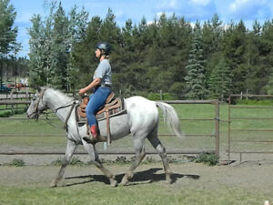 experienced confident trail horse