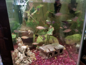 Cichlid group's for sale