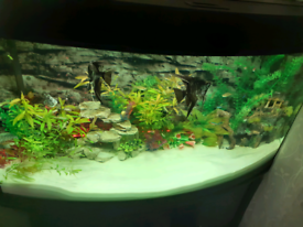 Internal aquarium filter