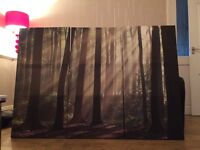 Set of 3 Wall Forrest Canvis pictures (from next)