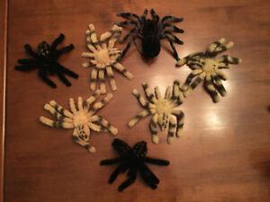 Tarentules pour décoration d'Halloween