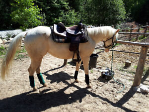 2 Year Old Cremello Filly 2 Blue Eyes!!