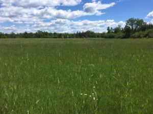 Farm Land /Pasture for Rent