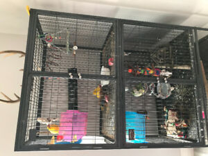 Birds and cage for sale