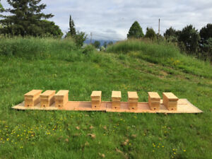 Honey Bee Nucleus Hives for Sale - Pitt Meadows