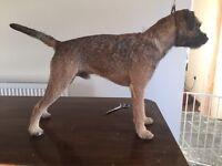 Border terrier hand stripping service