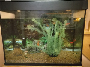 Fishes,  36 gallon tank with solid wood stand
