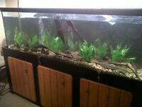 Custom 125 Freshwater Aquarium