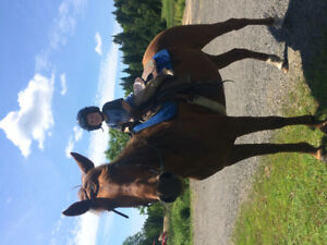 Great family horse