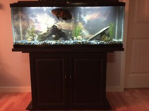 50g aquarium with stand