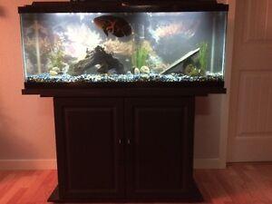 50g aquarium with stand