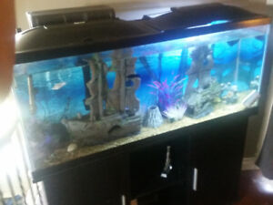 Fish tank complete cabinet