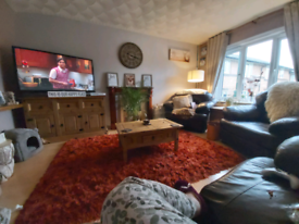 Large pile rug